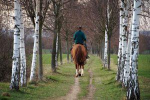 horse, rider, vernal
