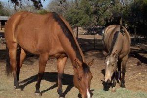 managing-equines