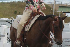 partnership-between-rider-and-horse