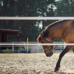 the horse, horseback riding, training